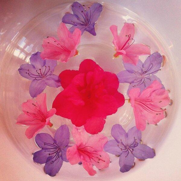 fleurs avril 7