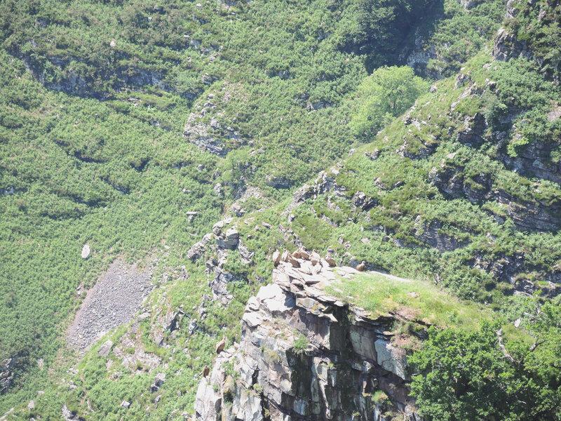 G) Penas d'Itxusi, falaise des vautours, vautours au loin (64)