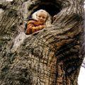 Morgane la fée des bois
