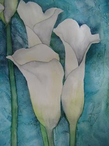D_tail_arums