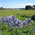 Île de Bréhat, fleurs