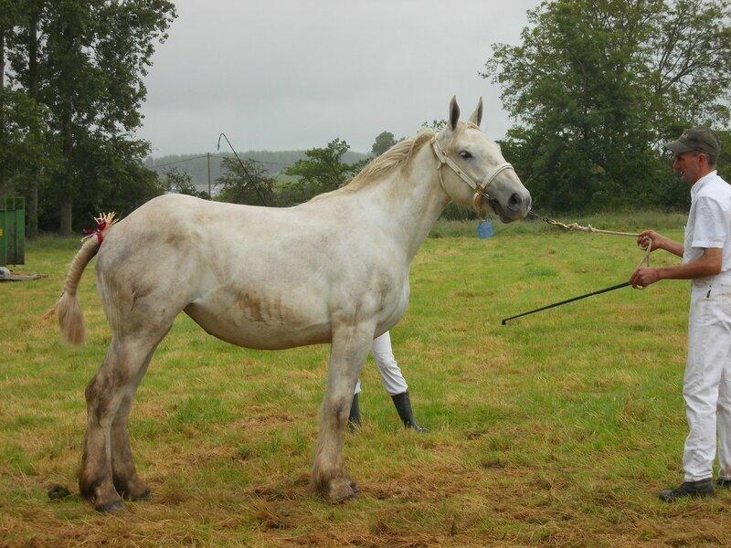 Eugénie 5 - 21 Juin 2016 - Concours d'élevage local - Bonningues les Ardres - 5e (2 ans)