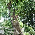 Un arbre majestueux