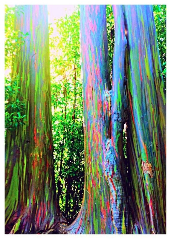 badou forets-insolites-arbres-etranges-monde-13[1]