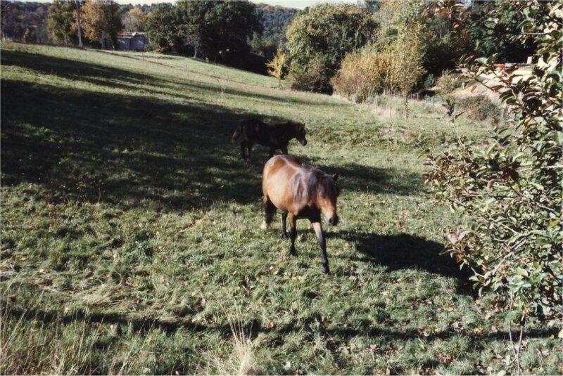 chevaux dans le vallon des sarthes