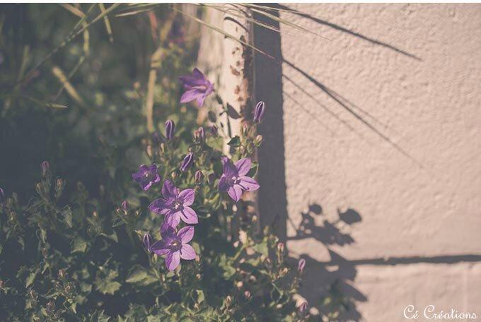 fleurs_jardin-14