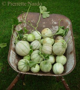 melons_brouette