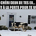 Pauvres vaches!!!