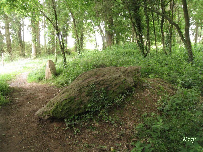 Brocéliande-la forêt