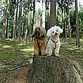 chiens foret