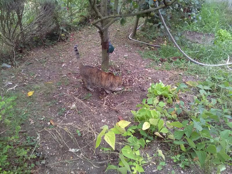 Noisette dans le jardin