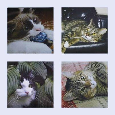 Katia (Le chat peint vert) Février 2013 (5)