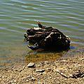 Lac du Broussau 02081643