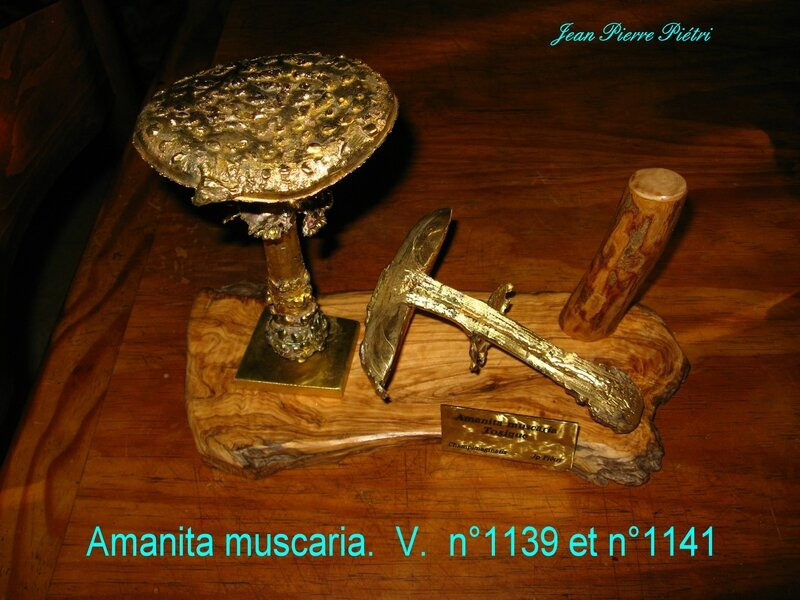 Amanita muscaria n°1139 et 1141