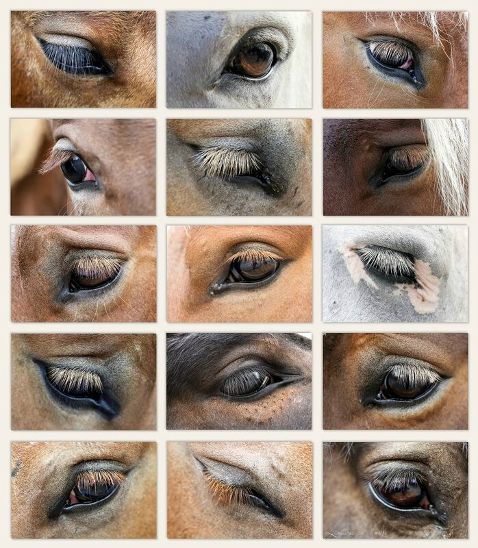 w_yeux chevaux Morlaas