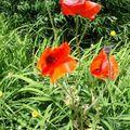 petites fleurs au coeur de ruines