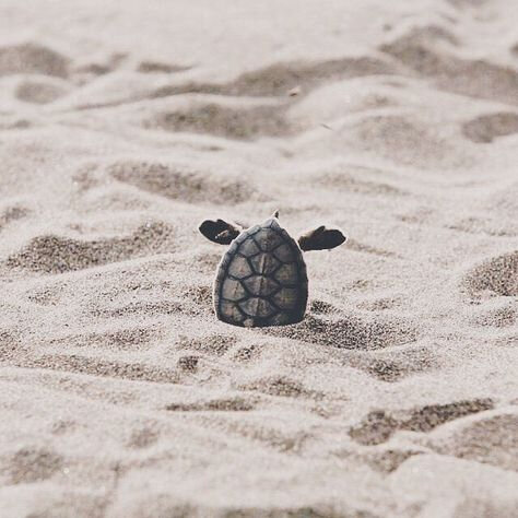 tortue_11
