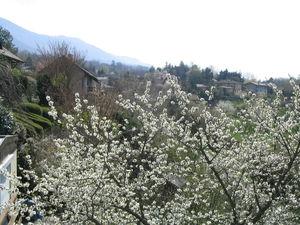 printemps_071