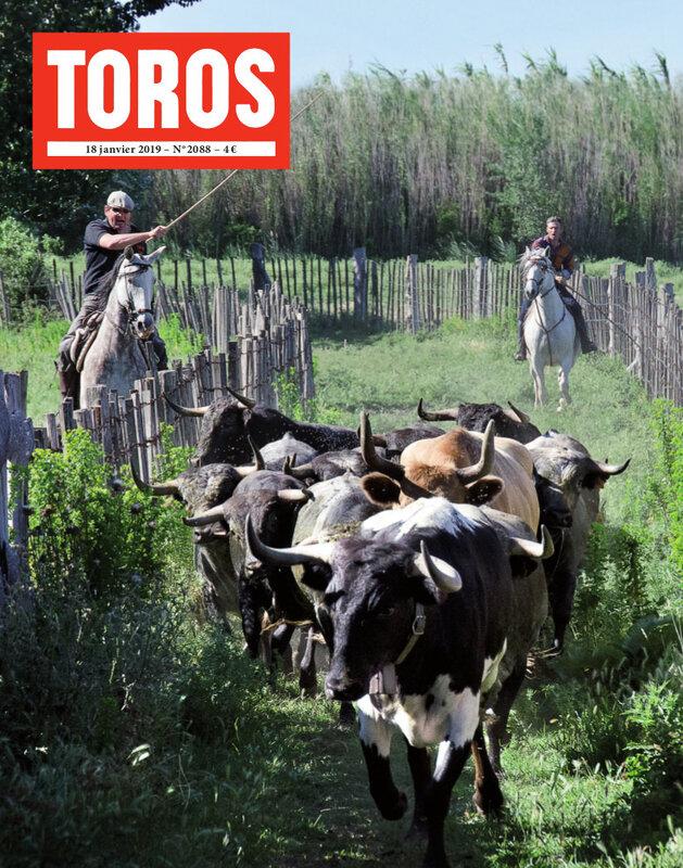 TOROS_2088