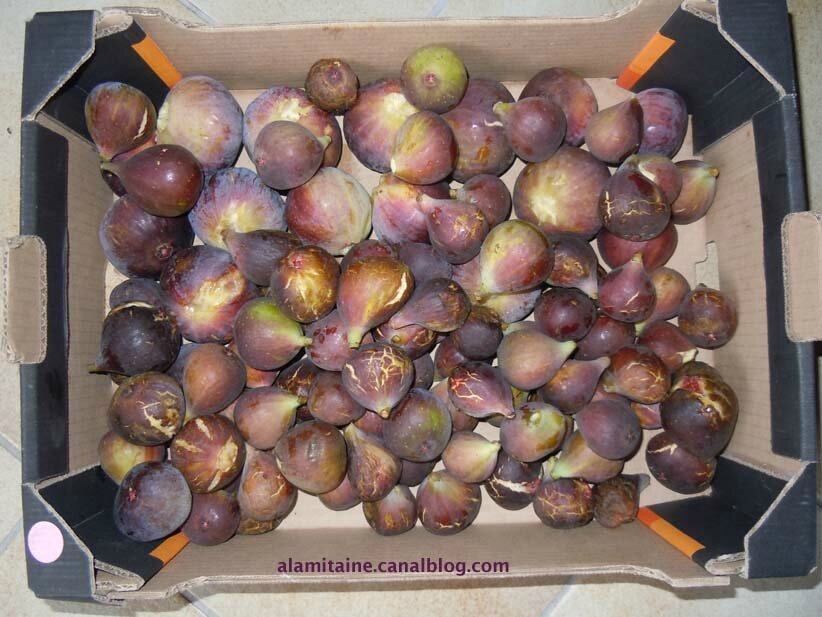 figues01