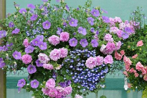 (suite) Fleurir son balcon avec les collections petits ...