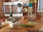 cabinet de curiosité ferme crocodile 2