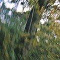 Création album forêts