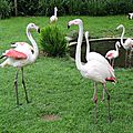 07 - Flamants roses