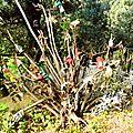 arbuste aux gants usagés sylvart yurtao