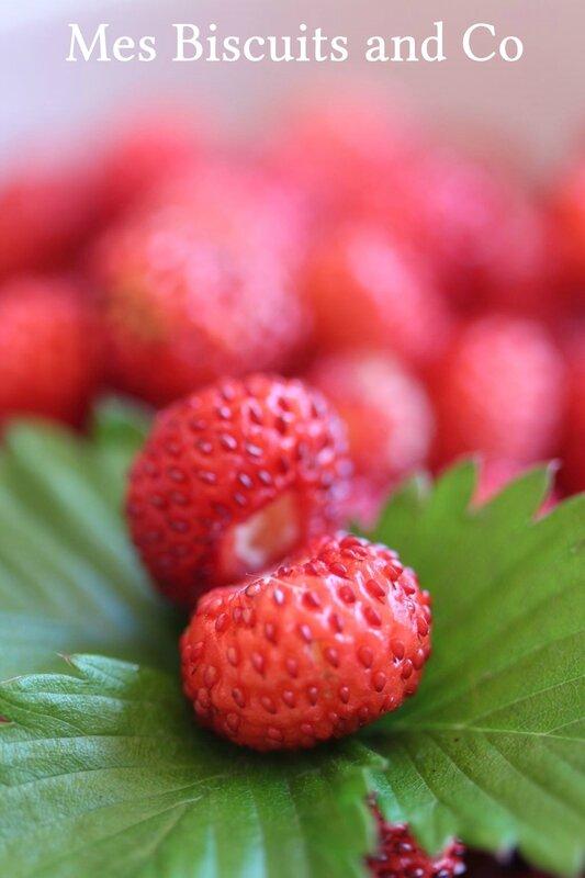 fraisesdesbois1