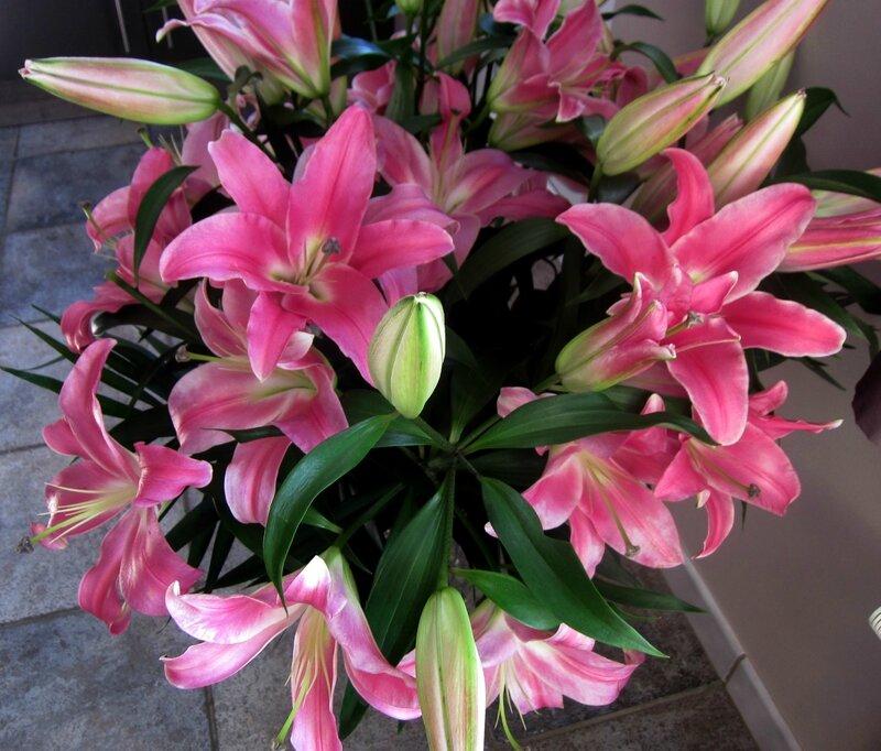 fleurs 001