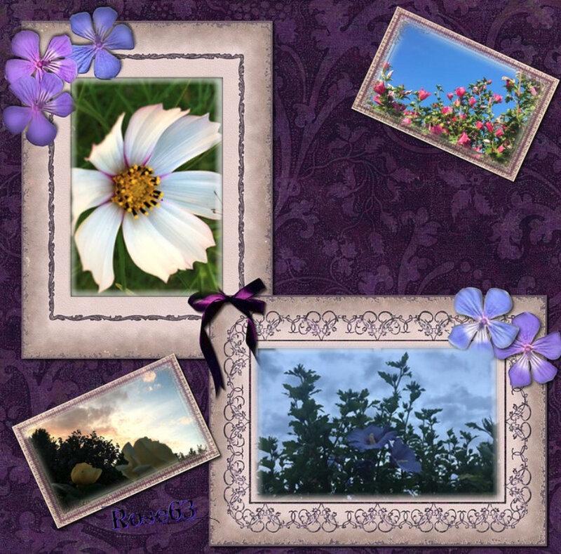 J'adore mon tout petit jardin Rose63Juillet2018