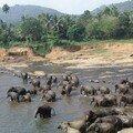 Réserve d'éléphants