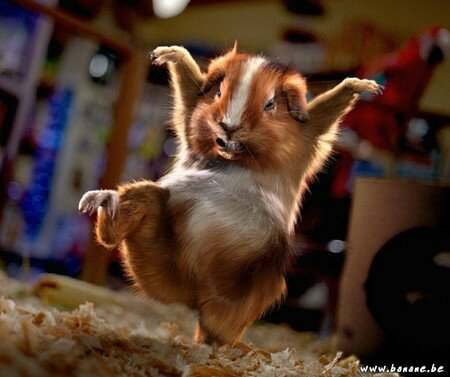 ninja_hamster_1_