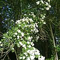 rambling rector l