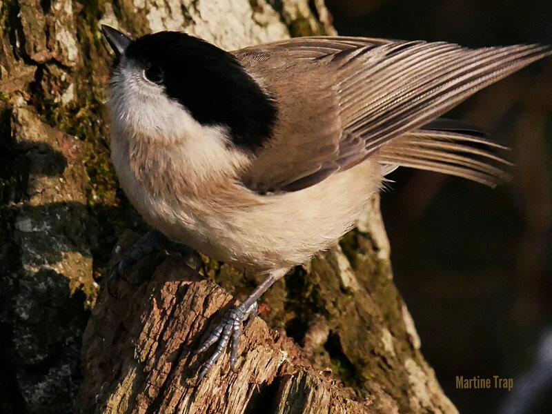 aviary-image-1518116868586