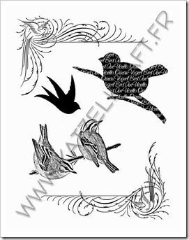 KTZ41_03 oiseaux