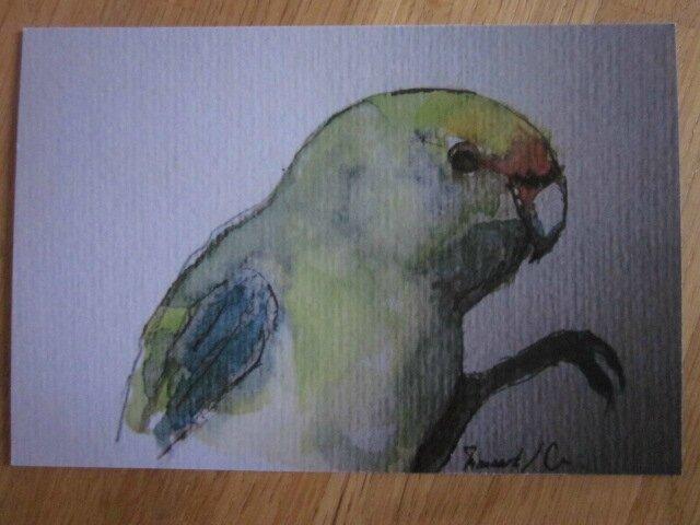 Carte Postale - Le Perroquet Vert (2)