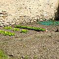 46.5 jardin mai 2020