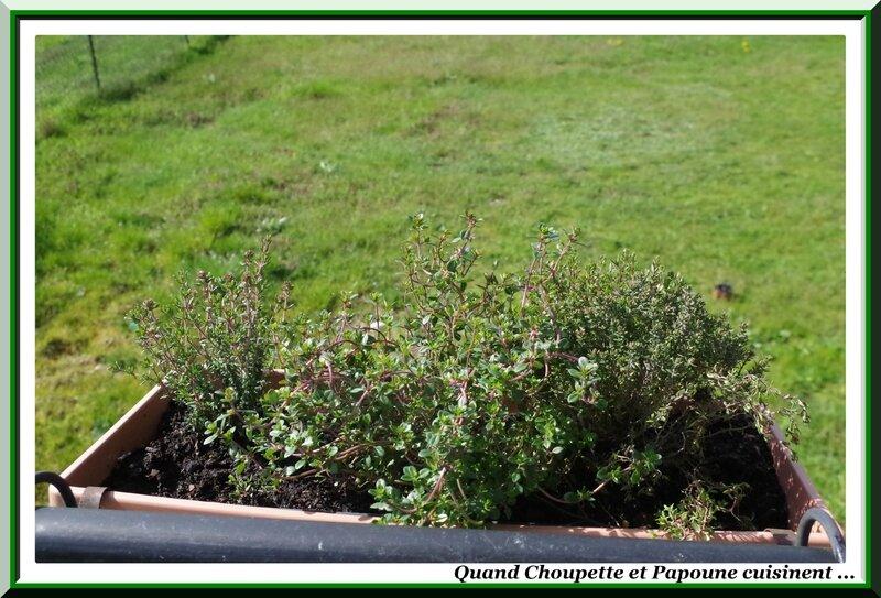 les herbes aromatiques-3318