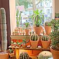 Les succulents cactus, paris