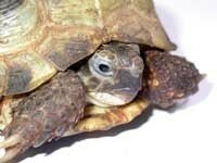 tortue_3