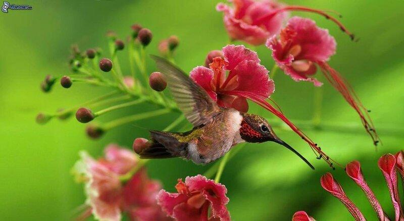 oiseaufleur