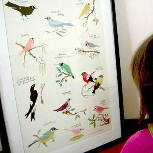 473-poster-oiseau-tinou-3