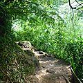 Manoa Falls Trail (183)