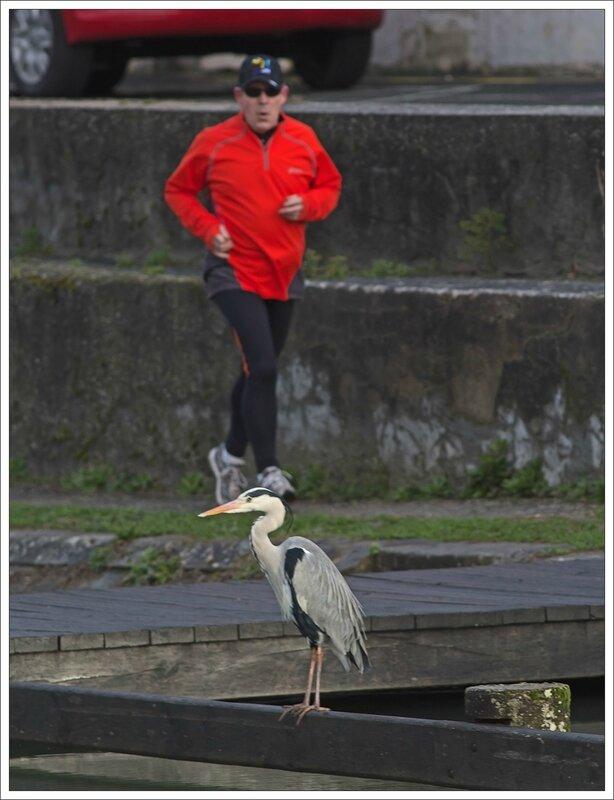 ville heron jogger orange matin 090214 2