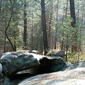 Dimanche en forêt