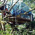 notre-dame-des-landes---operation-nettoyage-de-la-foret-de-rohane--1378