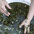 comment acheter les produits de déblocage et purification pour 2020?
