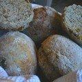 Petits pains vite-faits du matin de liliy: pavot-abricot !